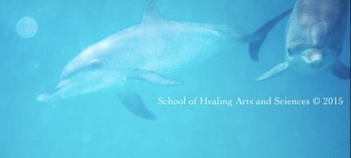 ビミニ島でイルカと泳ぐ