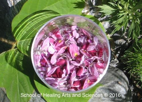 クズの花のフラワーエッセンス